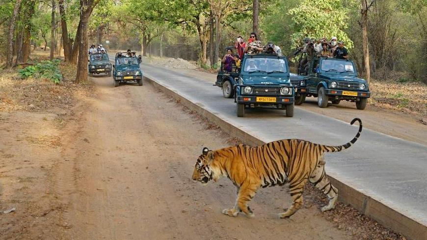 Rajasthan Tour with Tiger City